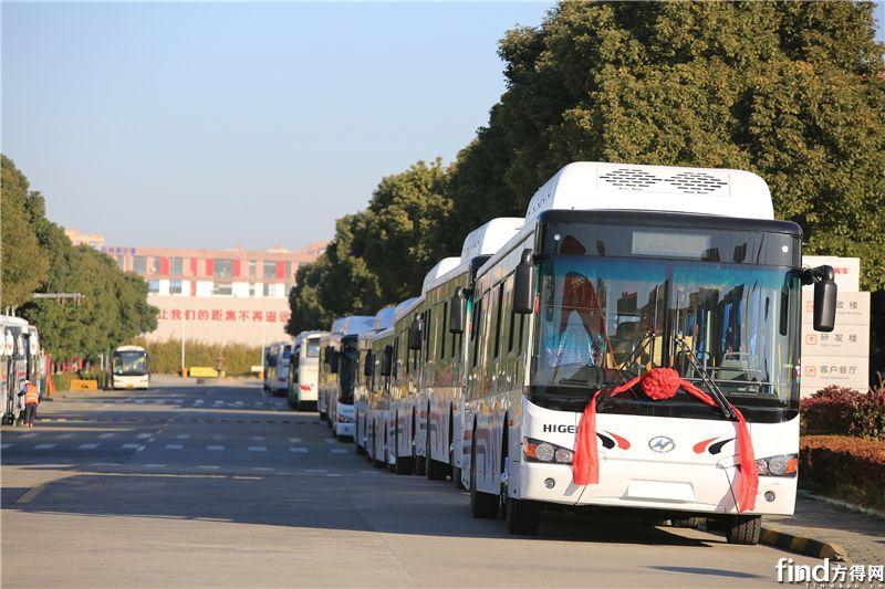 35辆海格客车出口 (2)