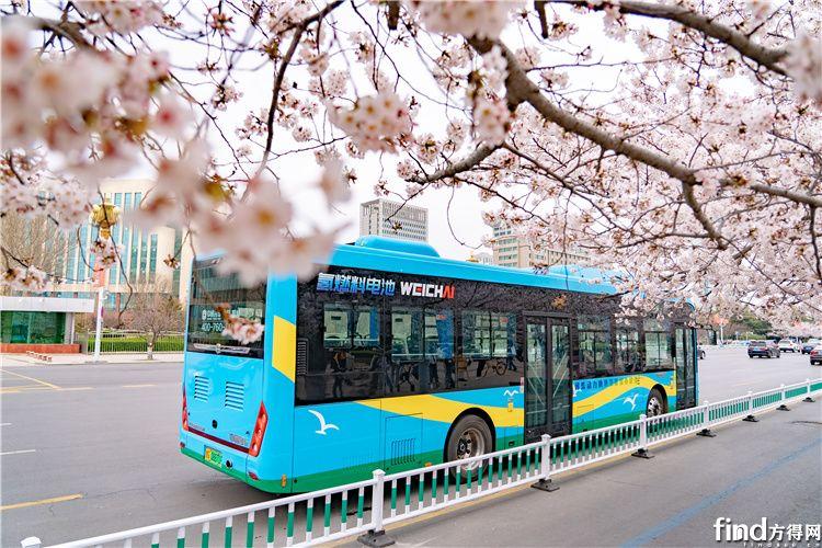 搭载潍柴氢燃料电池的中通公交车,成为了春天亮丽的风景线